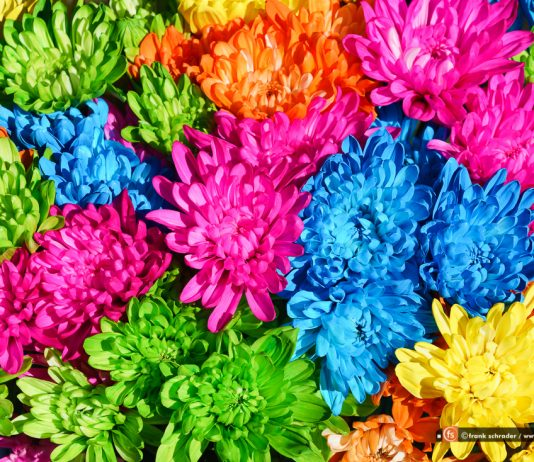Festival of Flowers, Mobile, Alabama, USA