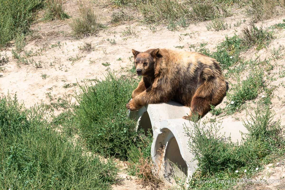 Wild Animal Sanctuary, Keenesburg, Colorado