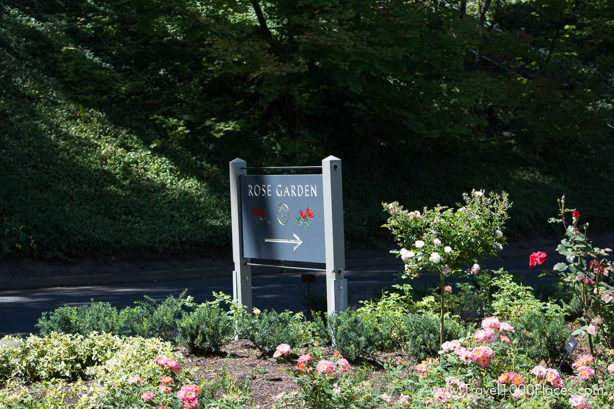 Washington Park, The Rose Garden -- Portland, Oregon