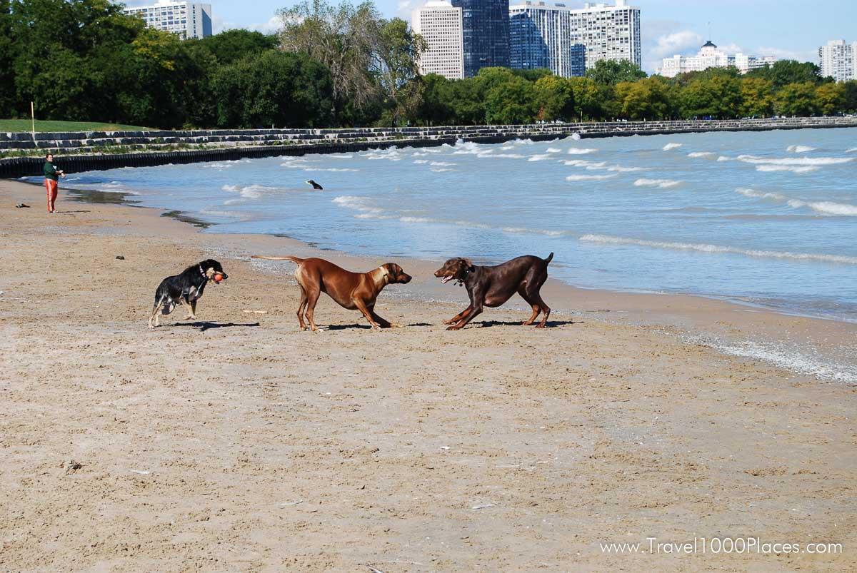 Chicago Montrose Beach -- THE dog beach in Chicago
