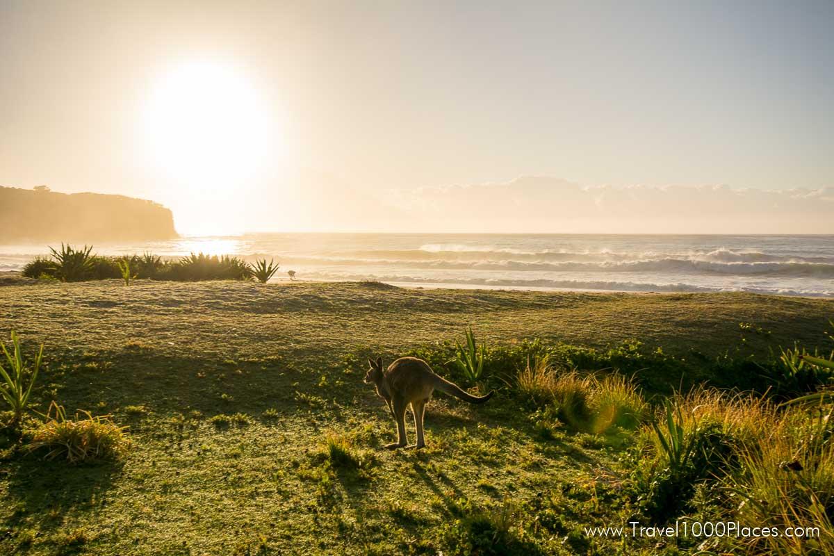 Murramarang National Park (Australia-NSW) near Batemans Bay and its golden beaches