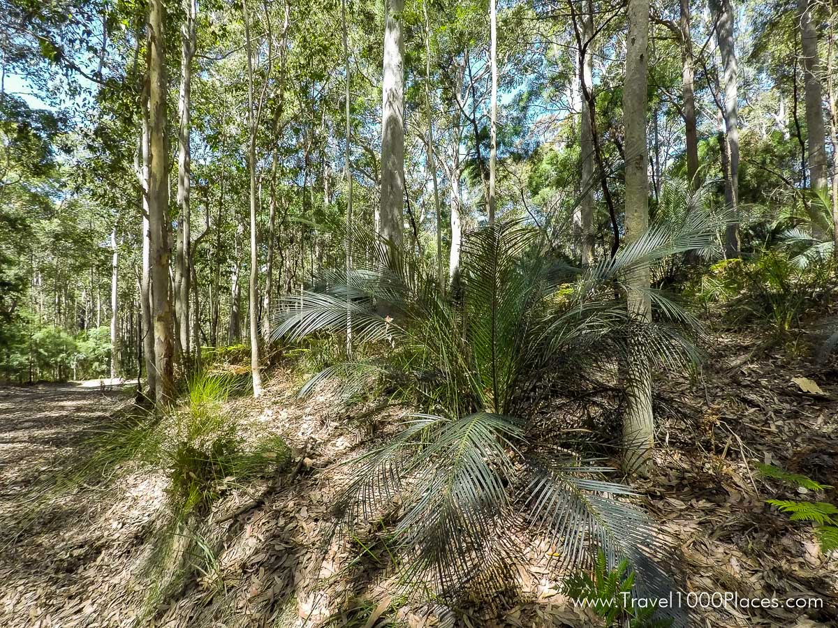 Roads through Murramarang National Park (Australia-NSW) near Batemans Bay